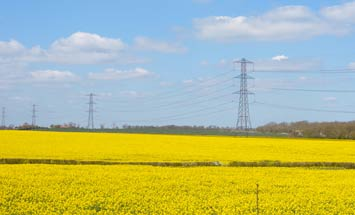 rapeseed electricity
